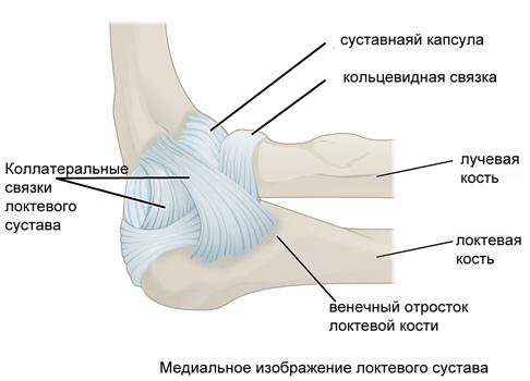 Перелом венечного отростка локтевого сустава реабилитация шансы на восстановление дисплазия суставов ребенок