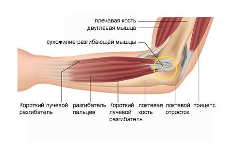 Вращение назад и к наружи в локтевом суставе перелом сустава руки у детей