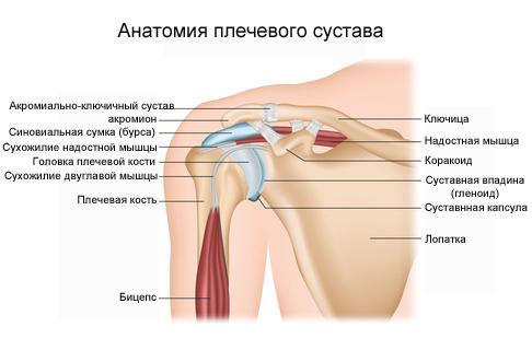 Острая боль внутри плечевого сустава таблетки для суставов и ревматизма онлайн